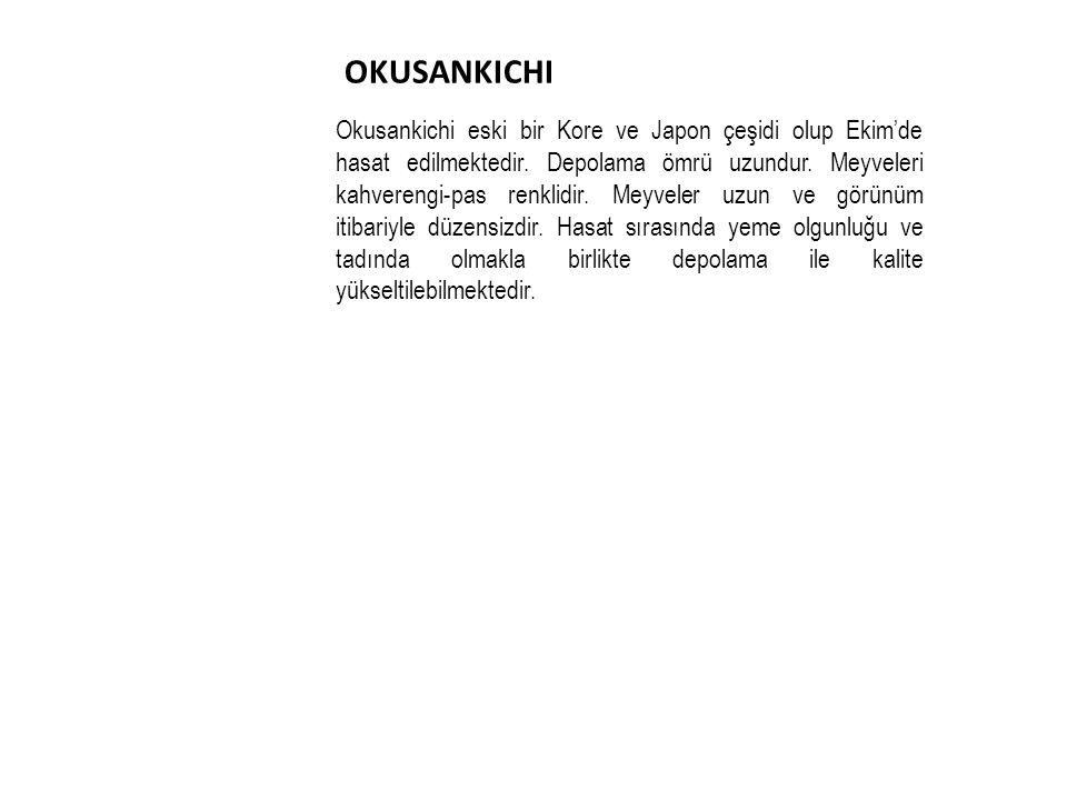 OKUSANKICHI Okusankichi eski bir Kore ve Japon çeşidi olup Ekim'de hasat edilmektedir.