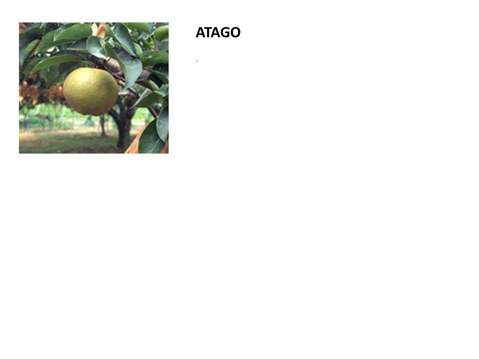 ATAGO.