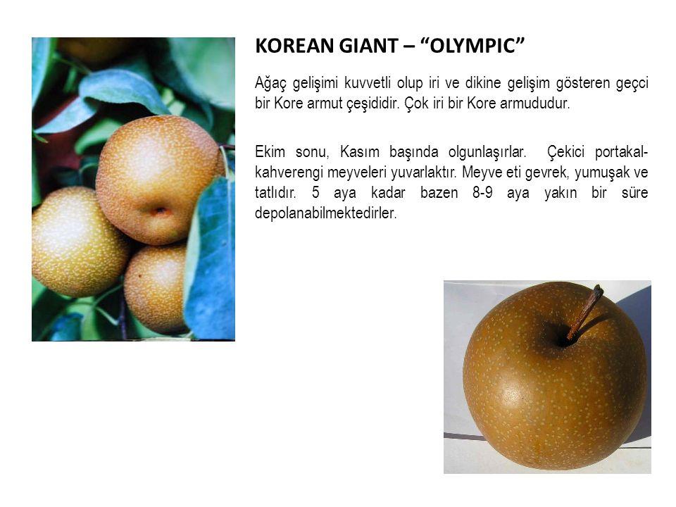 KOREAN GIANT – OLYMPIC Ağaç gelişimi kuvvetli olup iri ve dikine gelişim gösteren geçci bir Kore armut çeşididir.