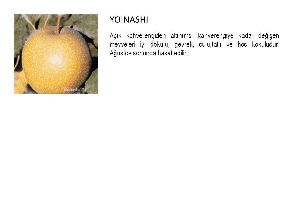 YOINASHI Açık kahverengiden altınımsı kahverengiye kadar değişen meyveleri iyi dokulu, gevrek, sulu,tatlı ve hoş kokuludur.