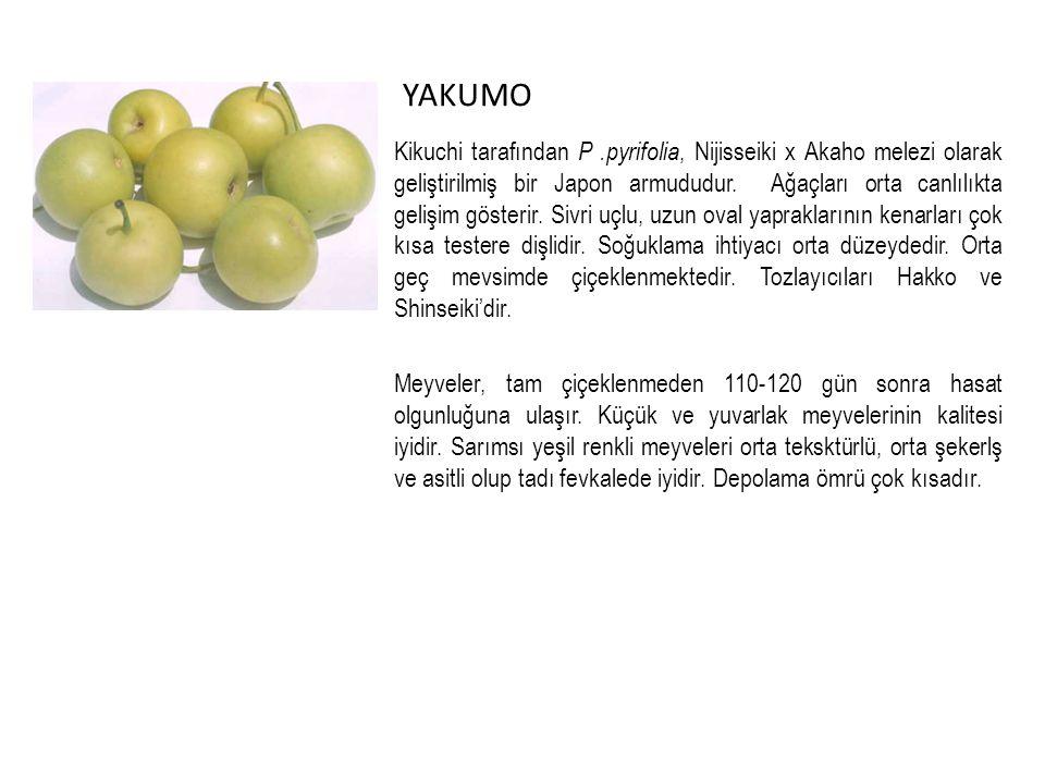 YAKUMO Kikuchi tarafından P.pyrifolia, Nijisseiki x Akaho melezi olarak geliştirilmiş bir Japon armududur.