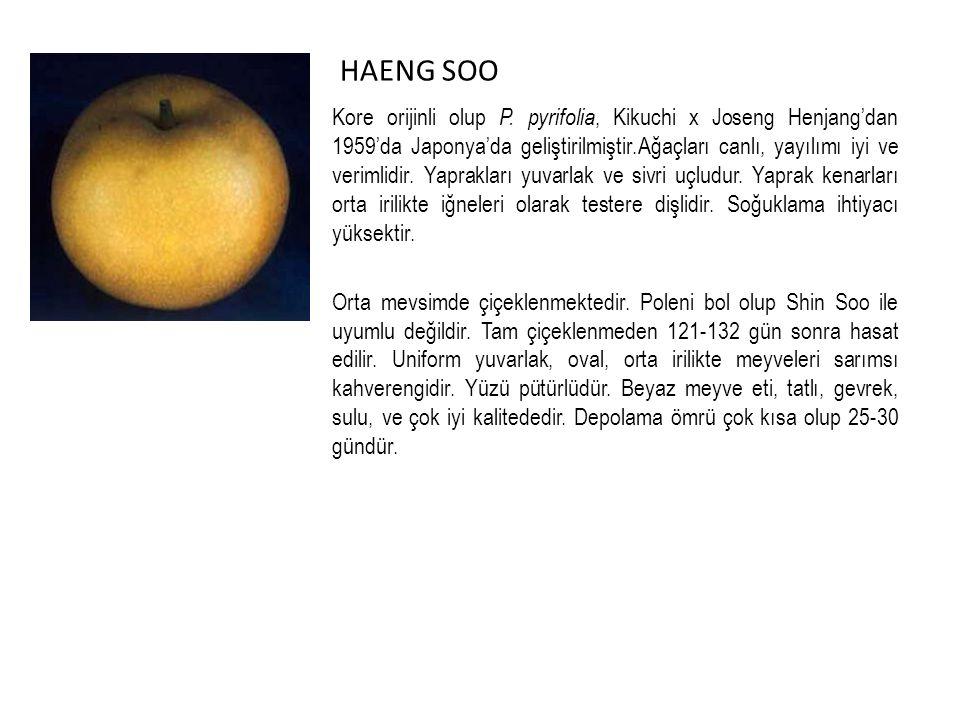 HAENG SOO Kore orijinli olup P.
