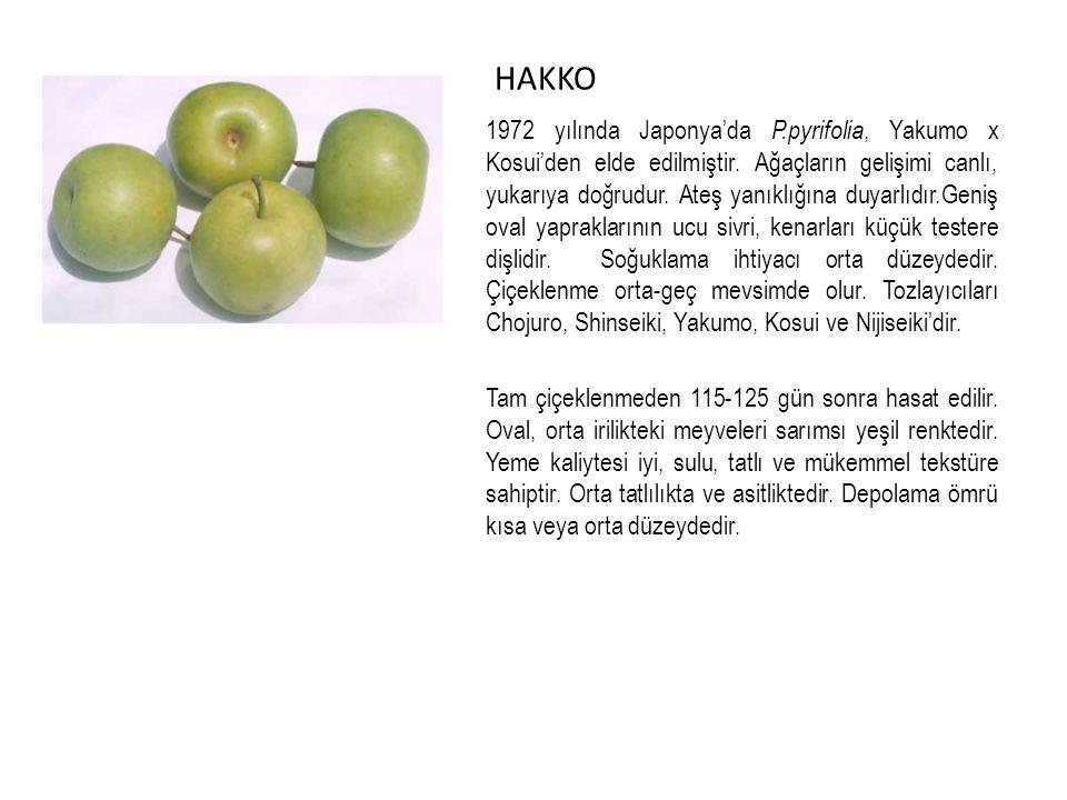 HAKKO 1972 yılında Japonya'da P.pyrifolia, Yakumo x Kosui'den elde edilmiştir.