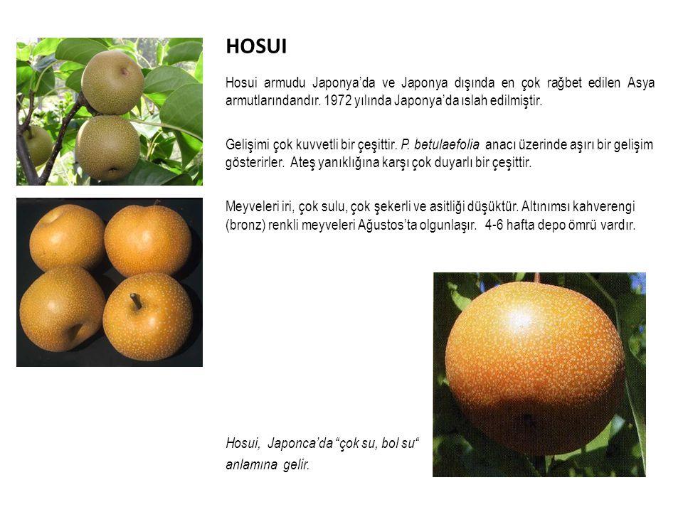 HOSUI Hosui armudu Japonya'da ve Japonya dışında en çok rağbet edilen Asya armutlarındandır.