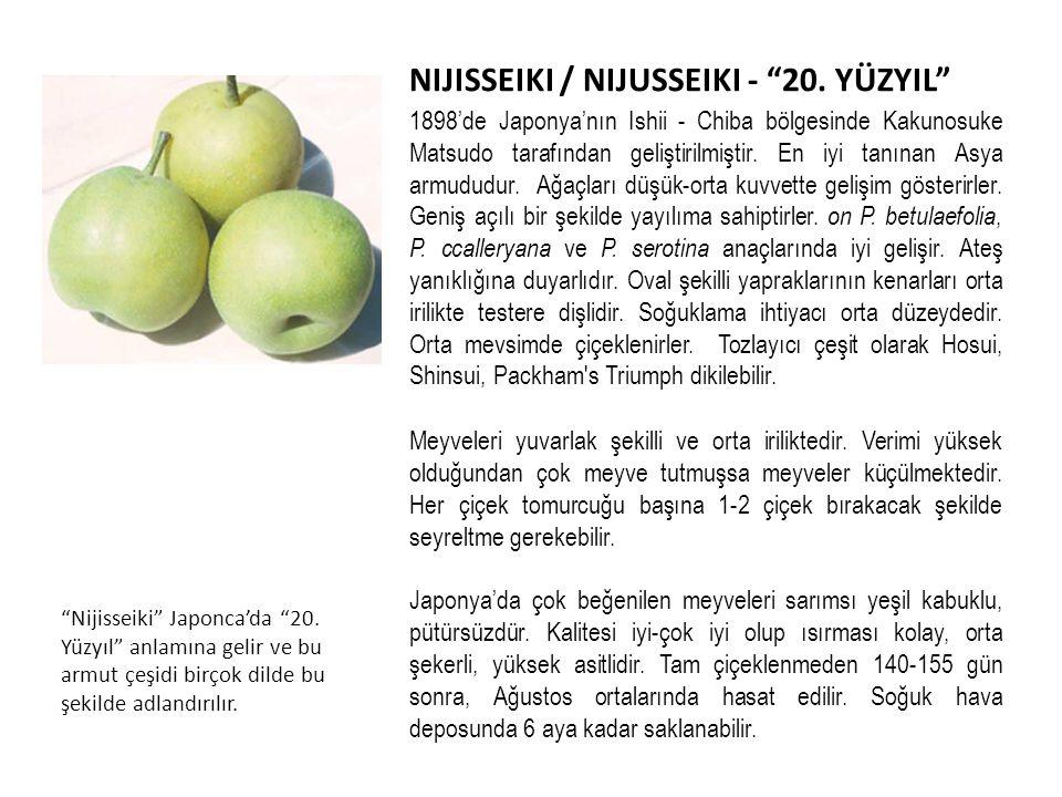 NIJISSEIKI / NIJUSSEIKI - 20.