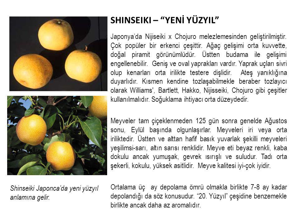 SHINSEIKI – YENİ YÜZYIL Japonya'da Nijiseiki x Chojuro melezlemesinden geliştirilmiştir.