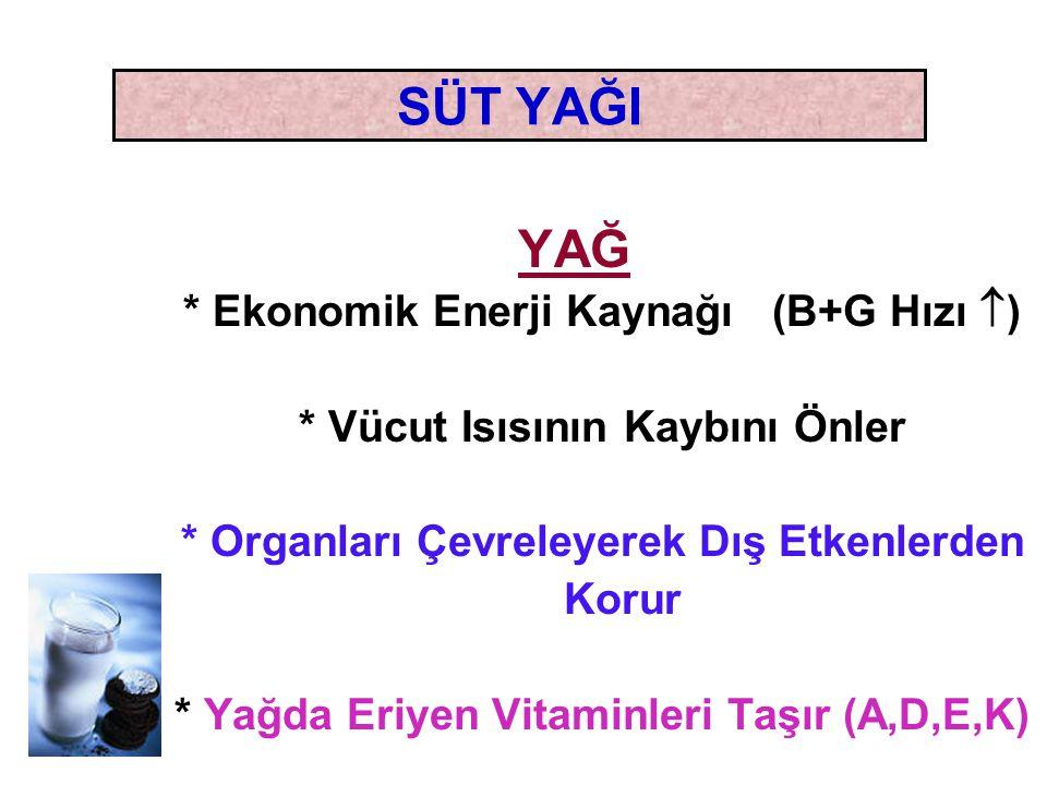 SÜT YAĞI YAĞ * Ekonomik Enerji Kaynağı (B+G Hızı  ) * Vücut Isısının Kaybını Önler * Organları Çevreleyerek Dış Etkenlerden Korur * Yağda Eriyen Vita