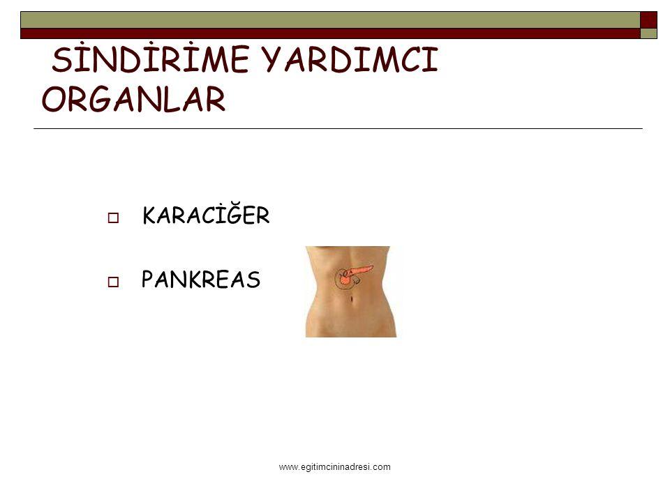 www.egitimcininadresi.com SİNDİRİME YARDIMCI ORGANLAR  KARACİĞER  PANKREAS