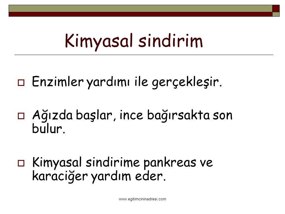 www.egitimcininadresi.com Kimyasal sindirim  Enzimler yardımı ile gerçekleşir.