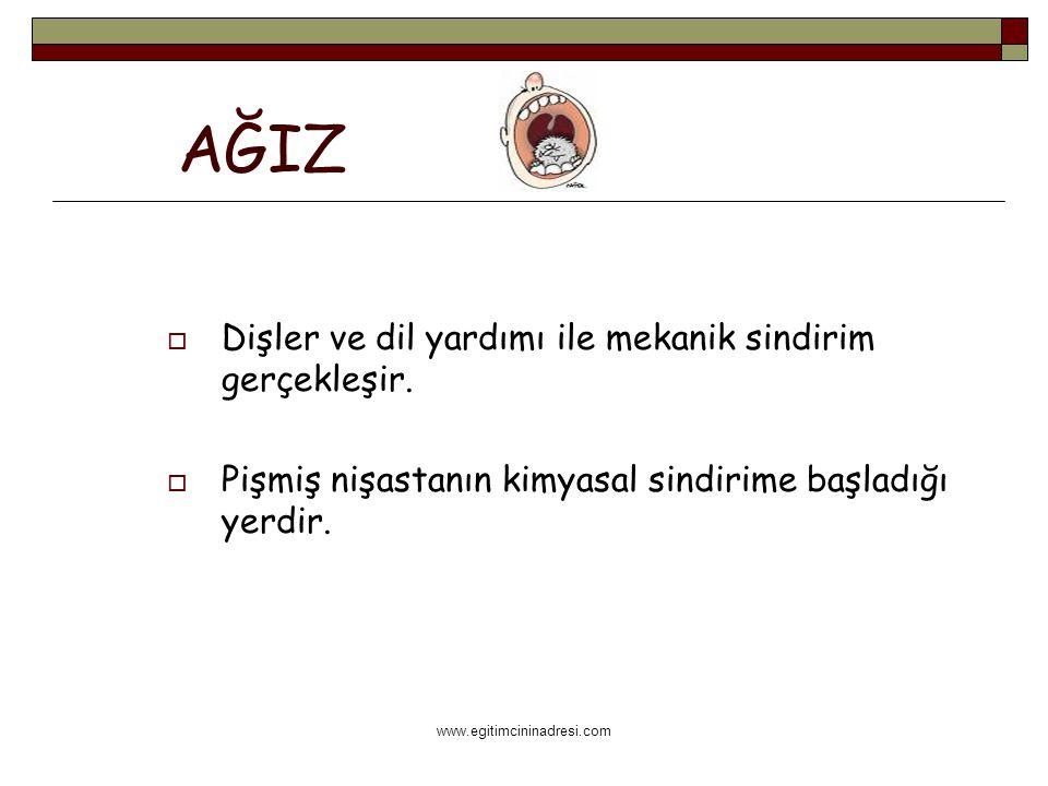 www.egitimcininadresi.com AĞIZ  Dişler ve dil yardımı ile mekanik sindirim gerçekleşir.  Pişmiş nişastanın kimyasal sindirime başladığı yerdir.