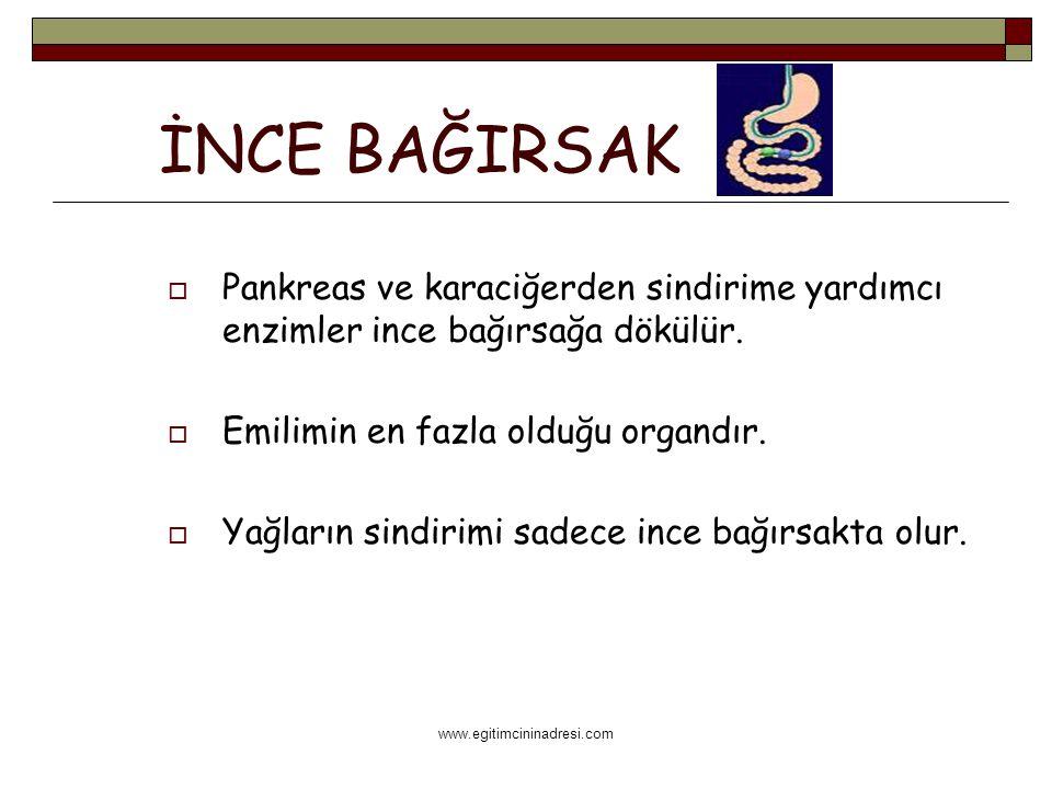 www.egitimcininadresi.com İNCE BAĞIRSAK  Pankreas ve karaciğerden sindirime yardımcı enzimler ince bağırsağa dökülür.