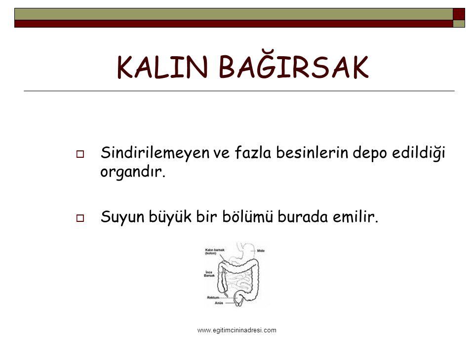 www.egitimcininadresi.com KALIN BAĞIRSAK  Sindirilemeyen ve fazla besinlerin depo edildiği organdır.  Suyun büyük bir bölümü burada emilir.