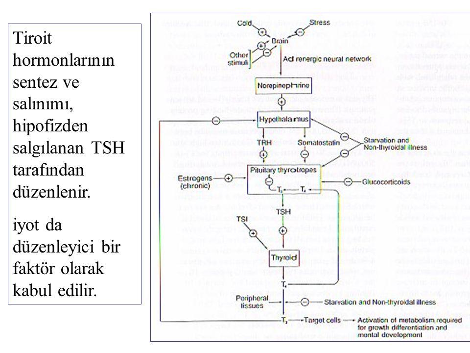 Adrenal korteks hormonları Glukokortikoidler Kortizol Mineralokortikoidler Aldosteron Adrenal korteks androjenleri Dehidroepiandrosteron sülfat (DHEAS) Adrenal korteksin farklı bölgelerinde kolesterolden sentezlenirler.