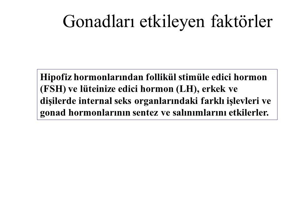 Hipofiz hormonlarından follikül stimüle edici hormon (FSH) ve lüteinize edici hormon (LH), erkek ve dişilerde internal seks organlarındaki farklı işle