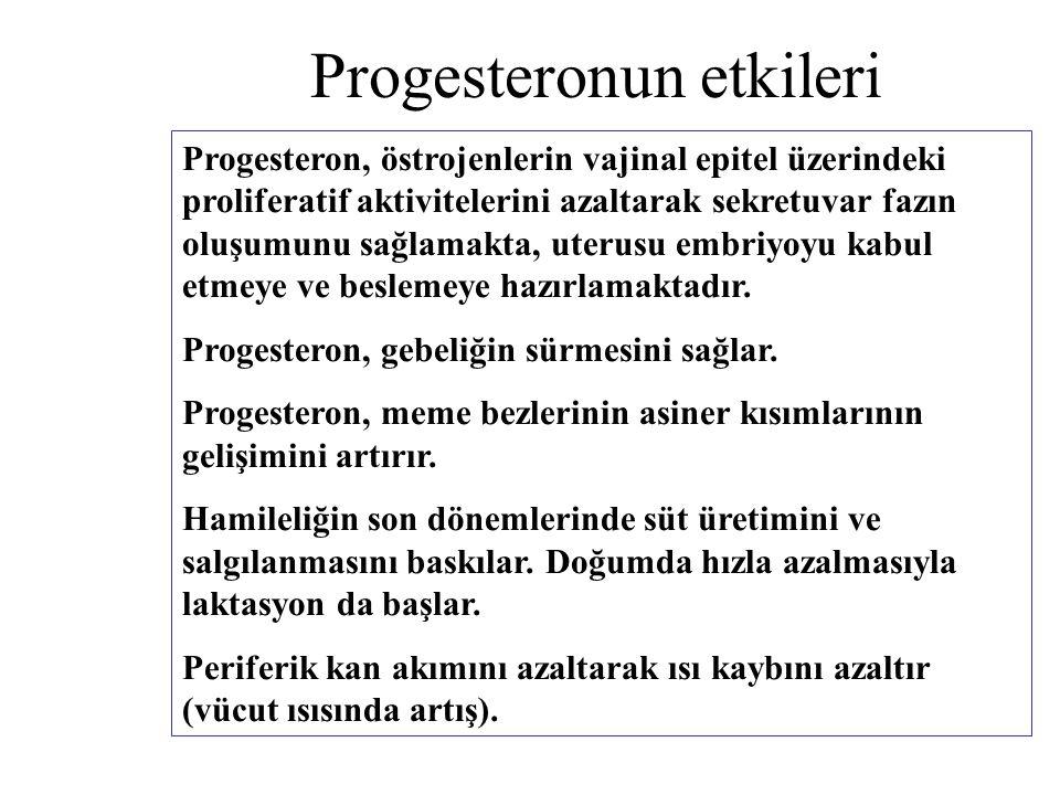 Progesteronun etkileri Progesteron, östrojenlerin vajinal epitel üzerindeki proliferatif aktivitelerini azaltarak sekretuvar fazın oluşumunu sağlamakt
