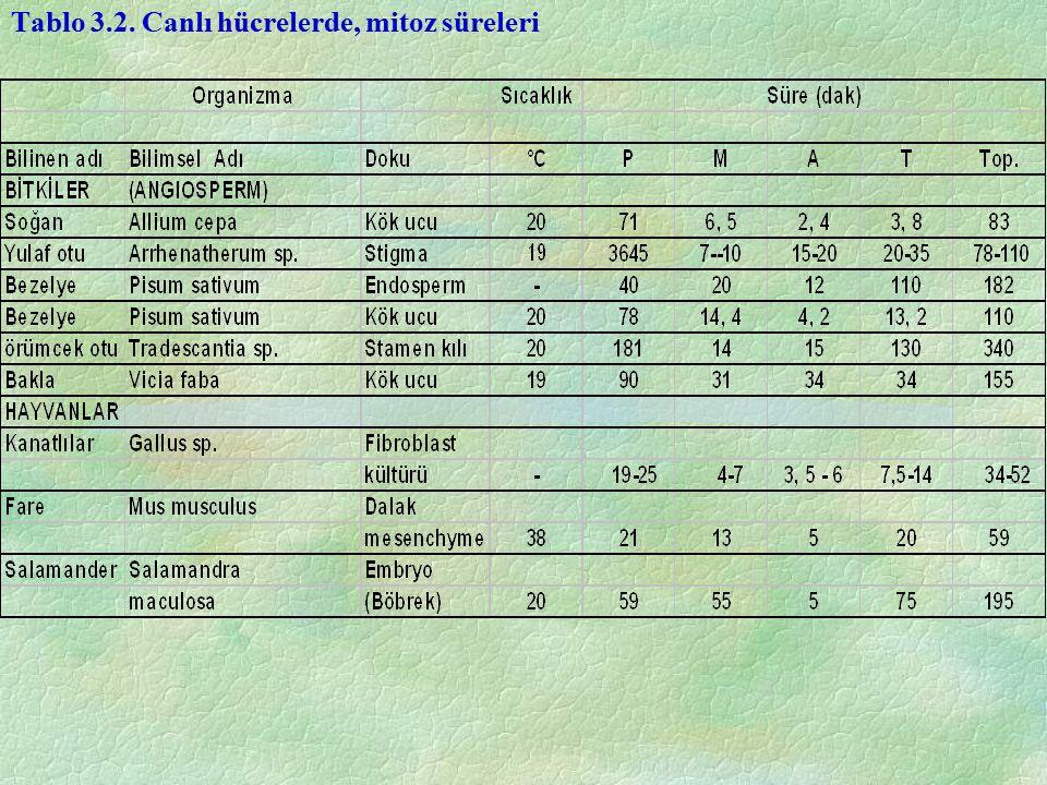 Tablo 3.2. Canlı hücrelerde, mitoz süreleri