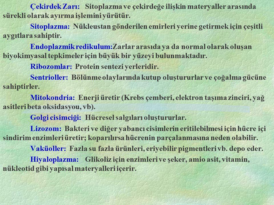 Tablo.3.1 Bazı Bitkilerde ve hayvanlarda kromozom Sayıları