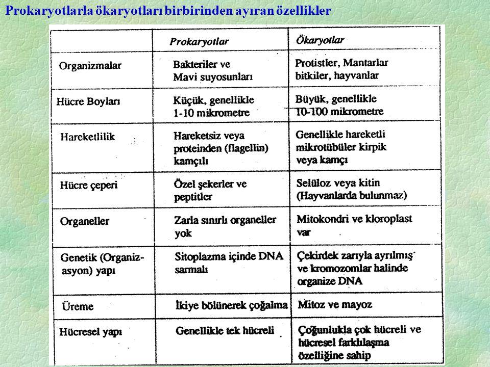 Prokaryotlarla ökaryotları birbirinden ayıran özellikler