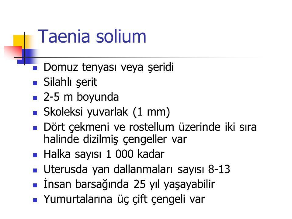 Taenia solium Domuz tenyası veya şeridi Silahlı şerit 2-5 m boyunda Skoleksi yuvarlak (1 mm) Dört çekmeni ve rostellum üzerinde iki sıra halinde dizil