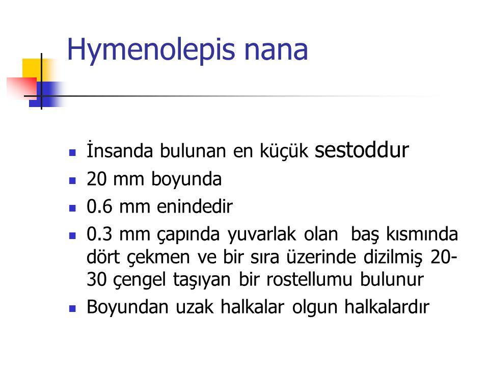 Hymenolepis nana İnsanda bulunan en küçük sestoddur 20 mm boyunda 0.6 mm enindedir 0.3 mm çapında yuvarlak olan baş kısmında dört çekmen ve bir sıra ü