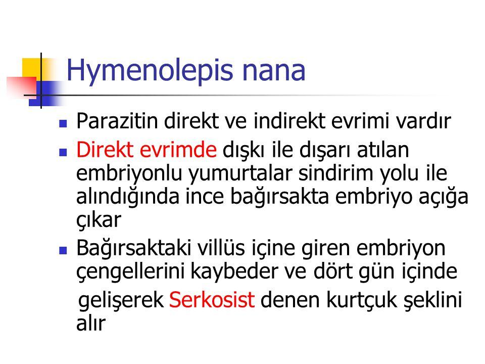 Hymenolepis nana Parazitin direkt ve indirekt evrimi vardır Direkt evrimde dışkı ile dışarı atılan embriyonlu yumurtalar sindirim yolu ile alındığında