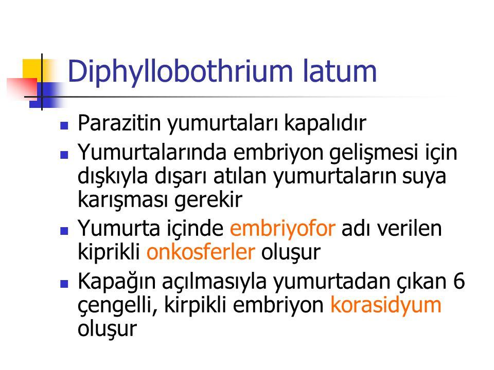 Diphyllobothrium latum Parazitin yumurtaları kapalıdır Yumurtalarında embriyon gelişmesi için dışkıyla dışarı atılan yumurtaların suya karışması gerek