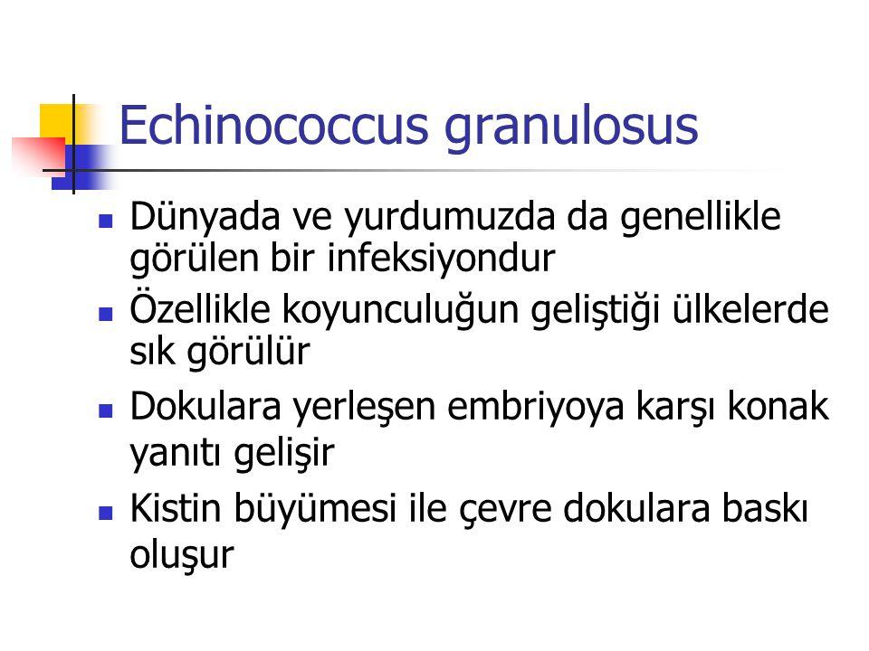 Echinococcus granulosus Dünyada ve yurdumuzda da genellikle görülen bir infeksiyondur Özellikle koyunculuğun geliştiği ülkelerde sık görülür Dokulara