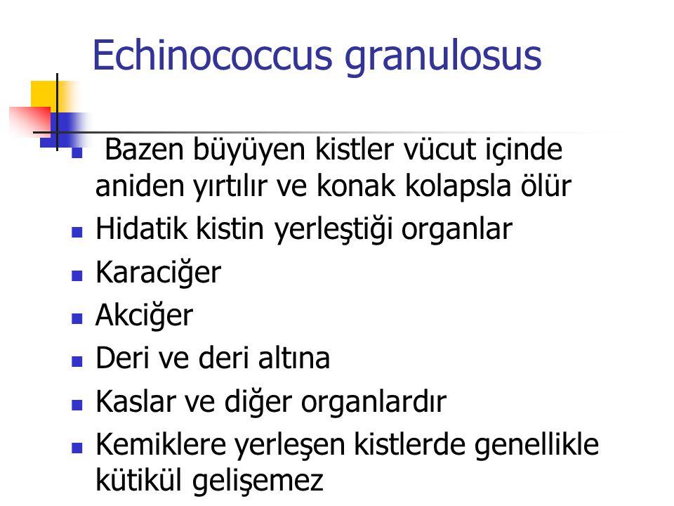 Echinococcus granulosus Bazen büyüyen kistler vücut içinde aniden yırtılır ve konak kolapsla ölür Hidatik kistin yerleştiği organlar Karaciğer Akciğer