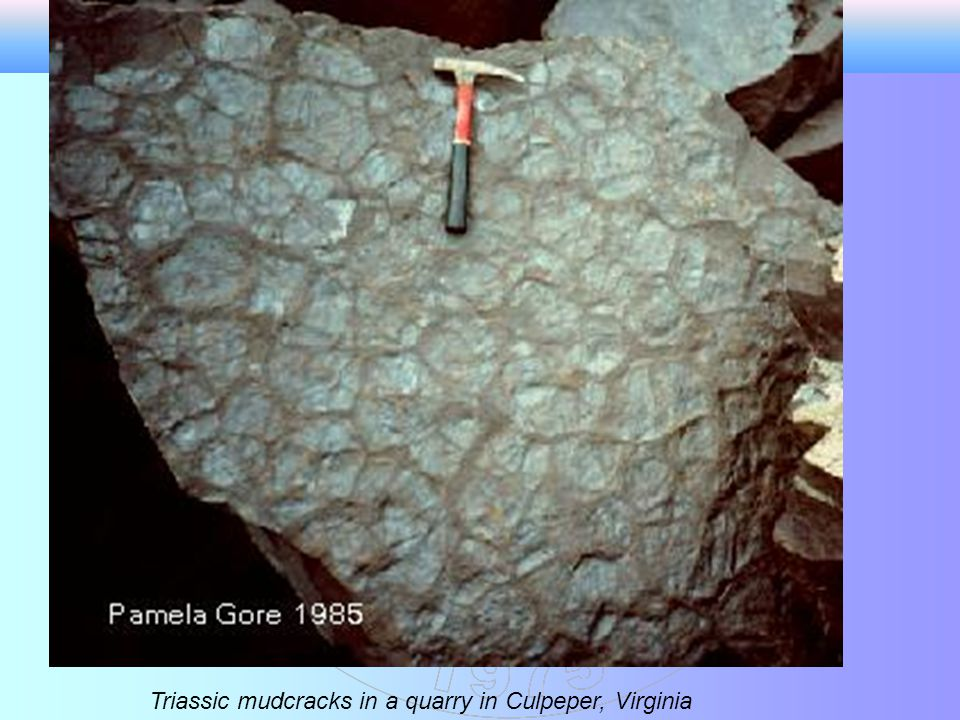 Triassic mudcracks in a quarry in Culpeper, Virginia