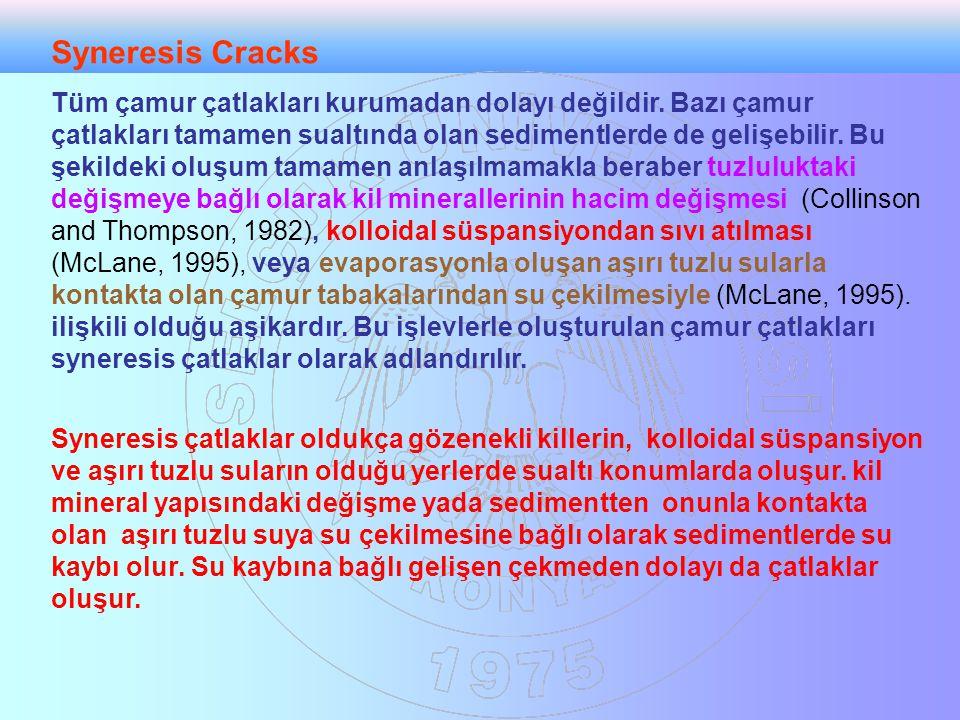 Syneresis Cracks Tüm çamur çatlakları kurumadan dolayı değildir. Bazı çamur çatlakları tamamen sualtında olan sedimentlerde de gelişebilir. Bu şekilde