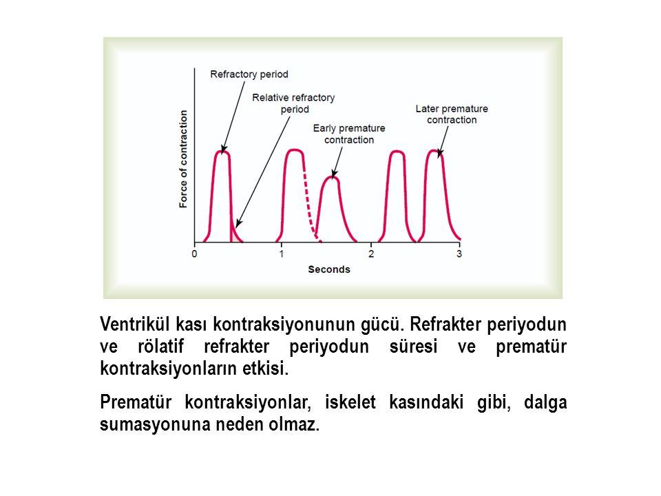 Ventrikül kası kontraksiyonunun gücü. Refrakter periyodun ve rölatif refrakter periyodun süresi ve prematür kontraksiyonların etkisi. Prematür kontrak