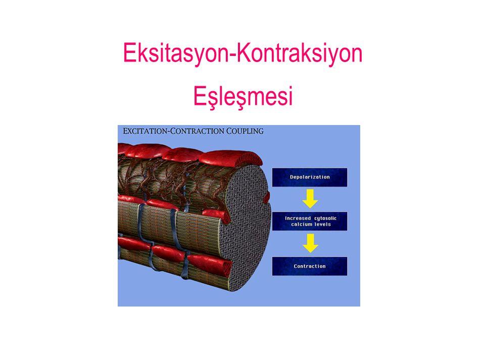 Eksitasyon-Kontraksiyon Eşleşmesi