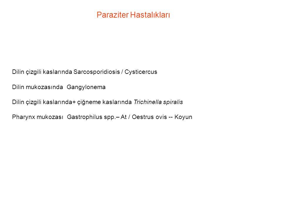 Paraziter Hastalıkları Dilin çizgili kaslarında Sarcosporidiosis / Cysticercus Dilin mukozasında Gangylonema Dilin çizgili kaslarında+ çiğneme kasları