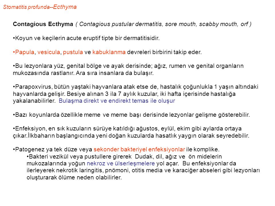 Stomatitis profunda-- Ecthyma Contagious Ecthyma ( Contagious pustular dermatitis, sore mouth, scabby mouth, orf ) Koyun ve keçilerin acute eruptif ti