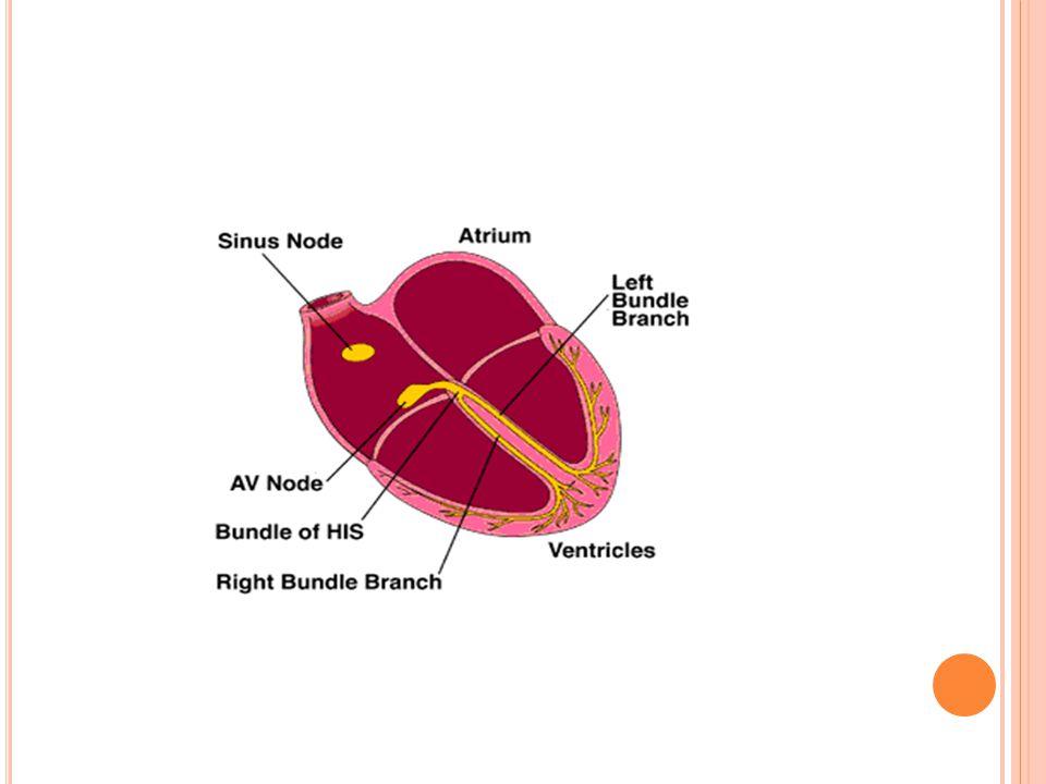 K ALP ; EN FAZLA UYARI ÇıKARAN ODAĞıN KONTROLÜNE GIRER En fazla uyarı çıkaran odak SAN 60-80/dak. A-V nod: 40-60/dak, Kalpteki bütün hücreler uyarı çı