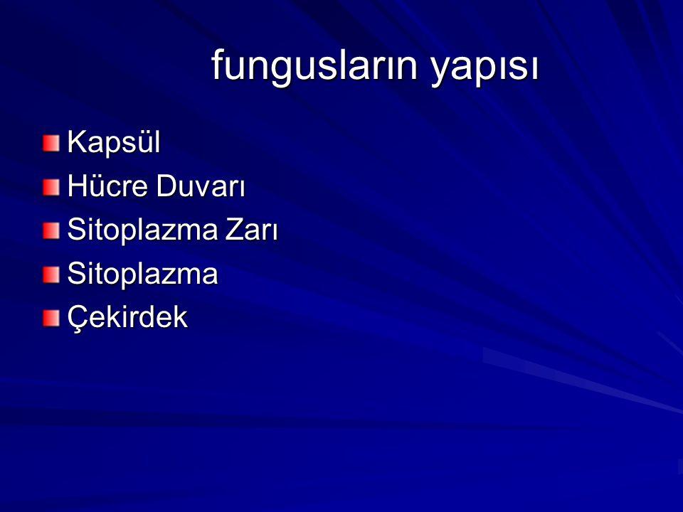 fungusların yapısı Kapsül Hücre Duvarı Sitoplazma Zarı SitoplazmaÇekirdek