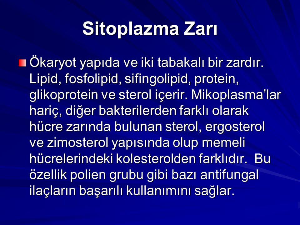 Sitoplazma Zarı Ökaryot yapıda ve iki tabakalı bir zardır. Lipid, fosfolipid, sifingolipid, protein, glikoprotein ve sterol içerir. Mikoplasma'lar har
