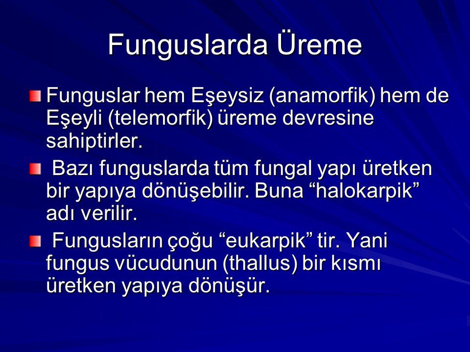 Funguslarda Üreme Funguslar hem Eşeysiz (anamorfik) hem de Eşeyli (telemorfik) üreme devresine sahiptirler. Bazı funguslarda tüm fungal yapı üretken b