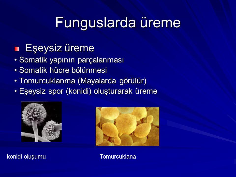 Funguslarda üreme Eşeysiz üreme Eşeysiz üreme Somatik yapının parçalanması Somatik yapının parçalanması Somatik hücre bölünmesi Somatik hücre bölünmes