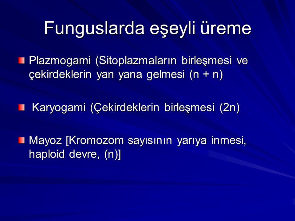 Funguslarda eşeyli üreme Plazmogami (Sitoplazmaların birleşmesi ve çekirdeklerin yan yana gelmesi (n + n) Karyogami (Çekirdeklerin birleşmesi (2n) Kar
