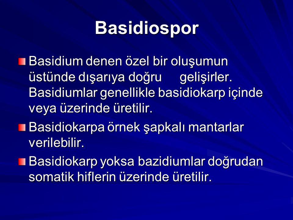 Basidiospor Basidium denen özel bir oluşumun üstünde dışarıya doğru gelişirler. Basidiumlar genellikle basidiokarp içinde veya üzerinde üretilir. Basi