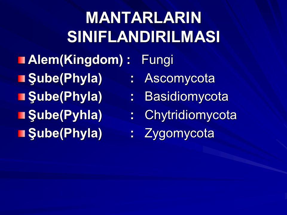 MANTARLARIN SINIFLANDIRILMASI Alem(Kingdom) : Fungi Şube(Phyla) : Ascomycota Şube(Phyla) : Basidiomycota Şube(Pyhla) : Chytridiomycota Şube(Phyla) : Z