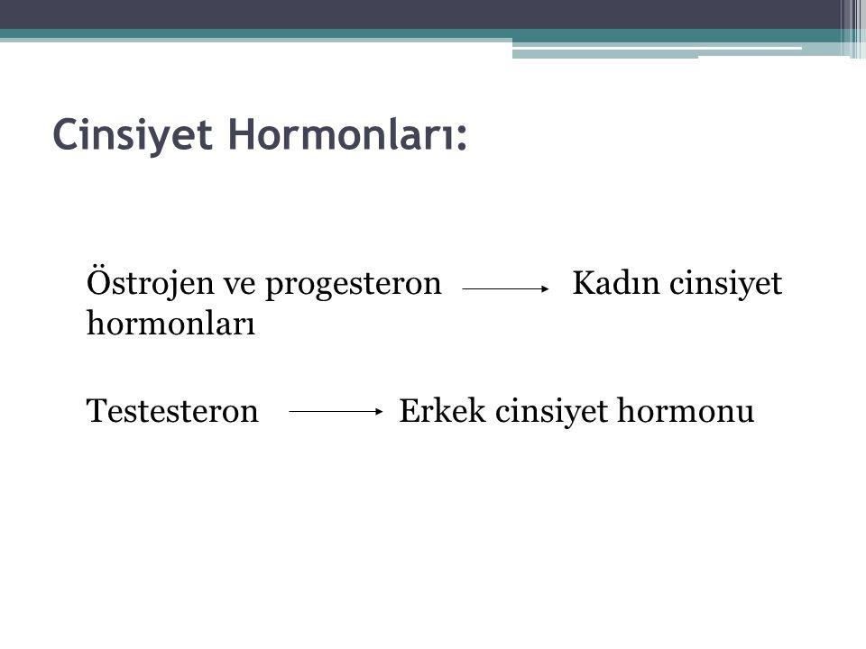 Cinsiyet Hormonları: Östrojen ve progesteron Kadın cinsiyet hormonları Testesteron Erkek cinsiyet hormonu