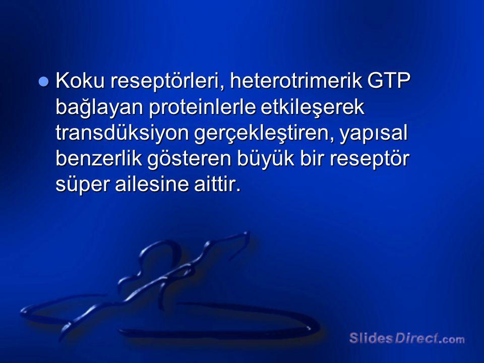 Koku reseptörleri, heterotrimerik GTP bağlayan proteinlerle etkileşerek transdüksiyon gerçekleştiren, yapısal benzerlik gösteren büyük bir reseptör sü