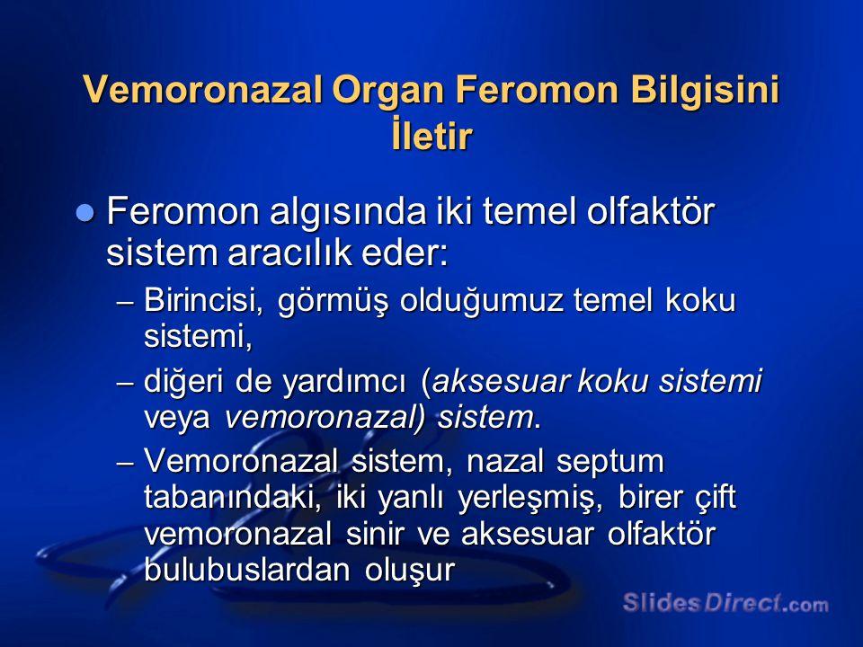 Vemoronazal Organ Feromon Bilgisini İletir Feromon algısında iki temel olfaktör sistem aracılık eder: Feromon algısında iki temel olfaktör sistem arac