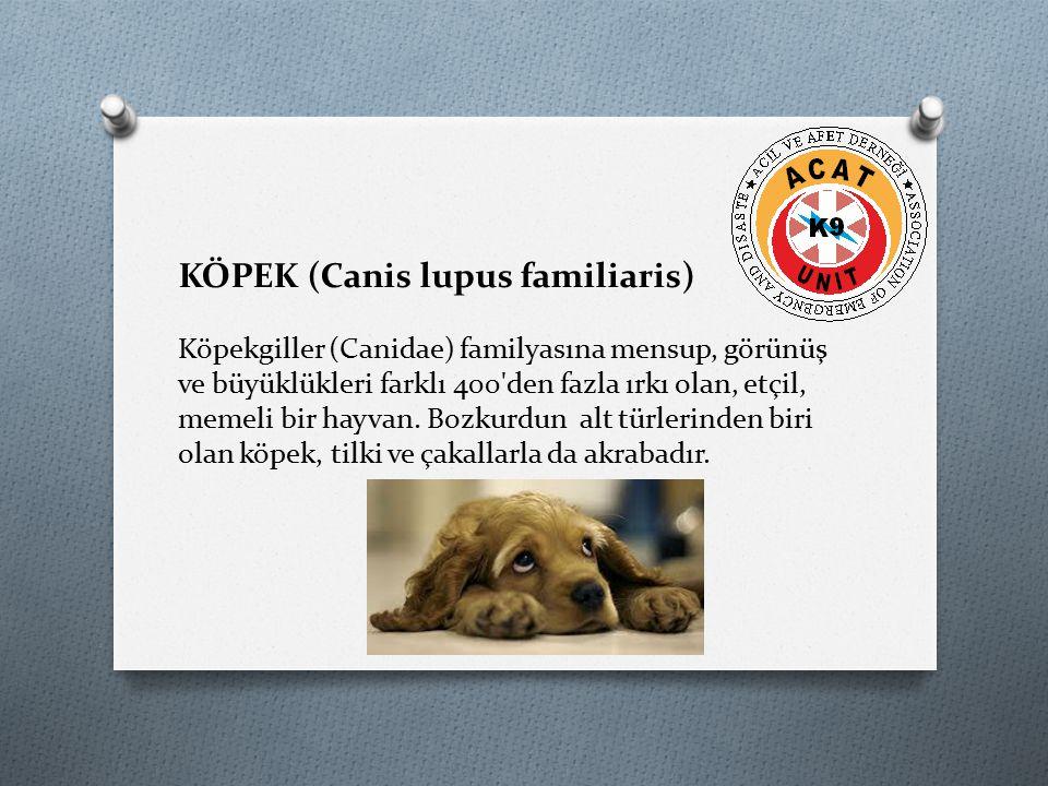 KÖPEK (Canis lupus familiaris) Köpekgiller (Canidae) familyasına mensup, görünüş ve büyüklükleri farklı 400'den fazla ırkı olan, etçil, memeli bir hay
