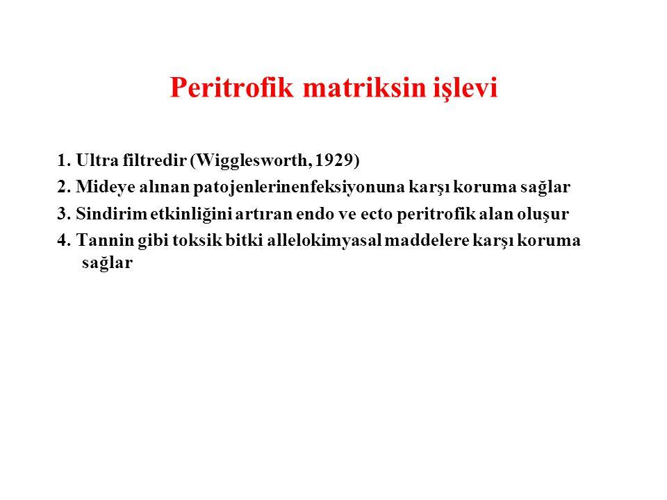 Peritrofik matriksin işlevi 1. Ultra filtredir (Wigglesworth, 1929) 2. Mideye alınan patojenlerinenfeksiyonuna karşı koruma sağlar 3. Sindirim etkinli