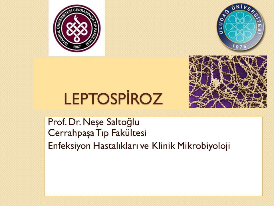LEPTOSP İ ROZ Prof. Dr. Neşe Salto ğ lu Cerrahpaşa Tıp Fakültesi Enfeksiyon Hastalıkları ve Klinik Mikrobiyoloji