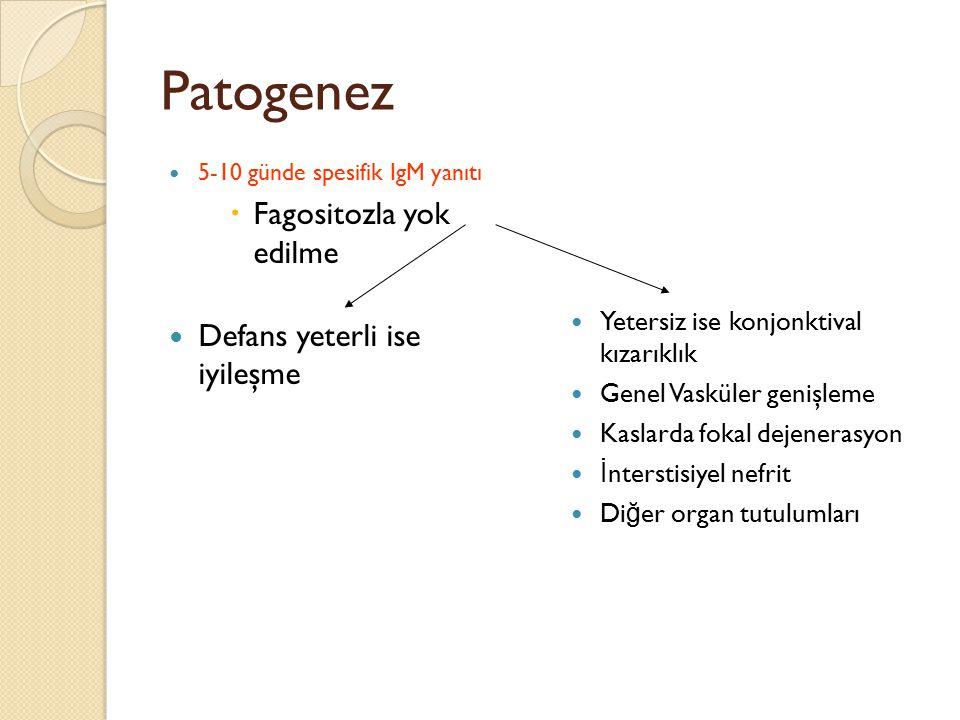 Patogenez 5-10 günde spesifik IgM yanıtı  Fagositozla yok edilme Defans yeterli ise iyileşme Yetersiz ise konjonktival kızarıklık Genel Vasküler geni