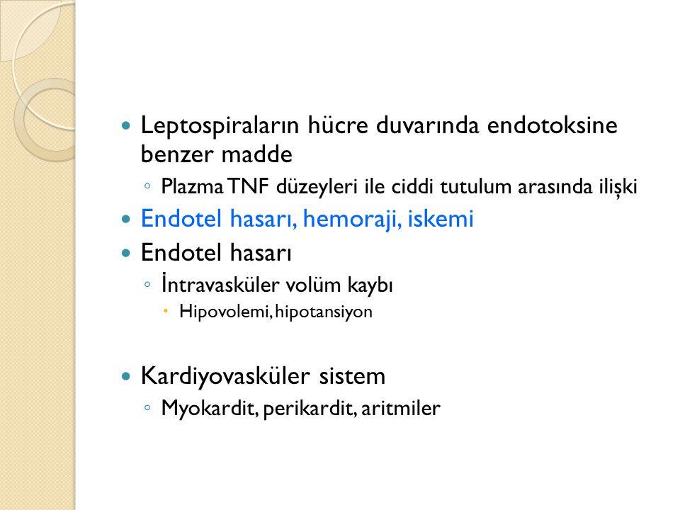 Leptospiraların hücre duvarında endotoksine benzer madde ◦ Plazma TNF düzeyleri ile ciddi tutulum arasında ilişki Endotel hasarı, hemoraji, iskemi End